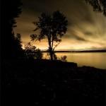 фото Волги - дерево